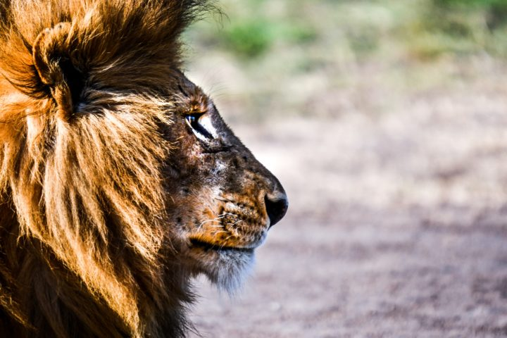 Lions Gotta Eat: Storytelling Marketing